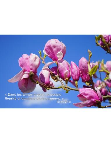 Carte postale - Magnolia (0212)