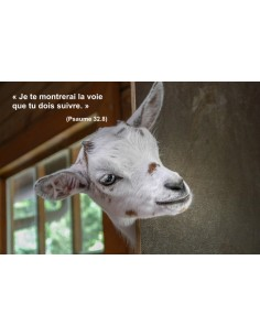 Carte postale - Biquette (0216)
