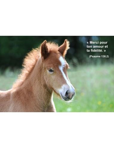 Carte postale - Poulain (021)