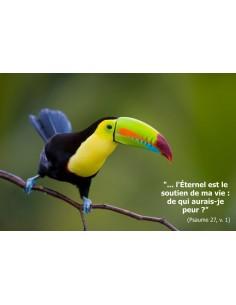 Carte postale - toucan