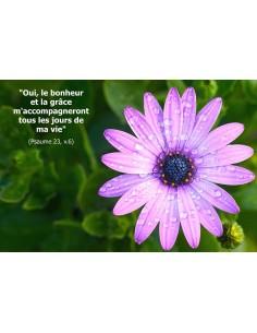 Carte postale - fleur violette
