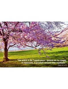 Carte postale - arbre en fleurs