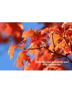 Carte postale - automne