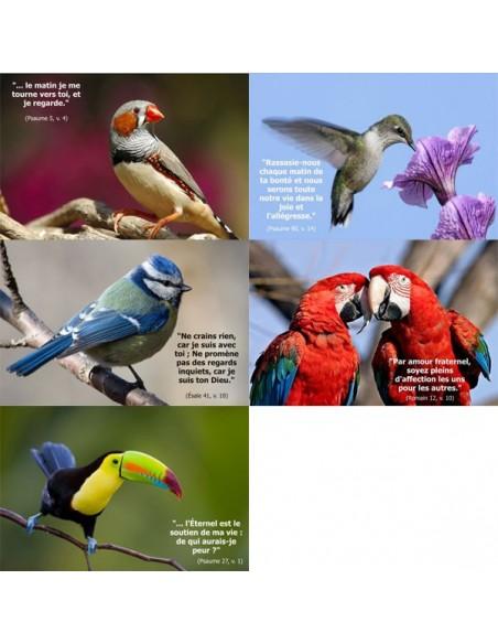 Cartes postales - Pack oiseaux