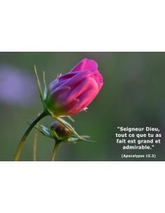 Carte postale - Bouton de rose (réf. 0123)