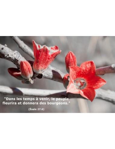 Carte postale - Bourgeons (réf. 0124)