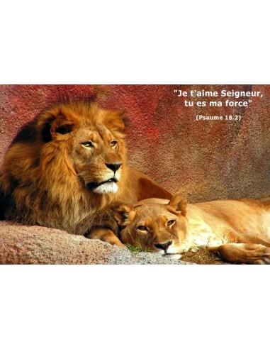 Carte postale - Lions (réf. 0134)