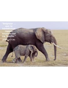 Carte postale - Éléphants (réf. 0135)