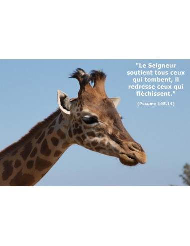 Carte postale - Girafe (réf. 0136)
