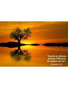 Carte postale - Arbre au coucher du soleil (réf. 0146)