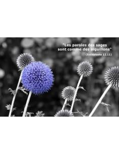 Carte postale - Chardon Bleu (réf. 0186)