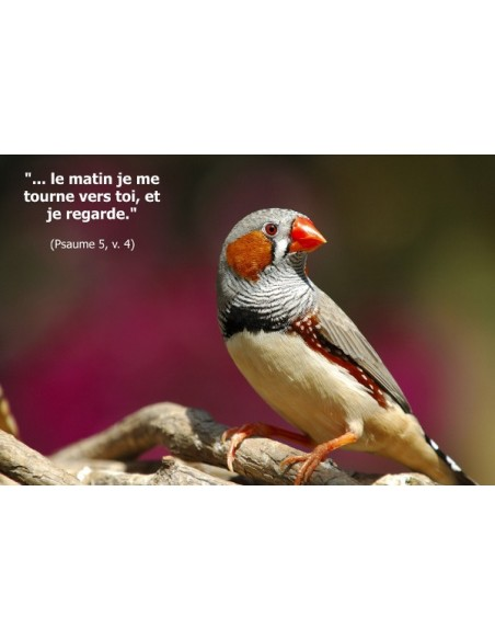 Pack Oiseaux